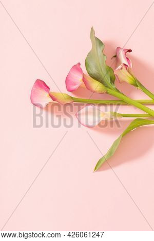 Beautiful Flowers Of Calla Lily On Paper Background