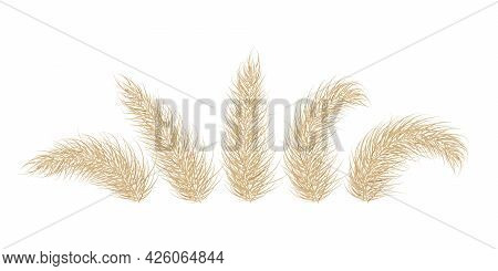 Pampas Dry Grass. One Branch Of Pampas Grass. Panicle, Feather Flower Head. Vector