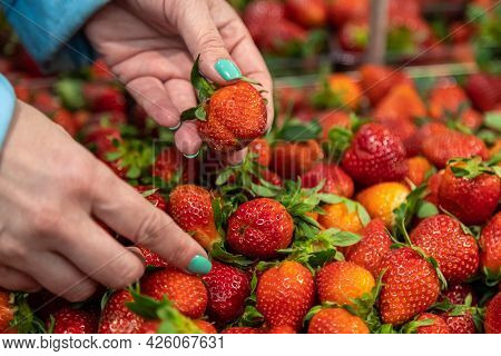 A Woman Chooses Juicy Strawberry Berries In The Store With A Tray. Hands Close-up Hold Berries
