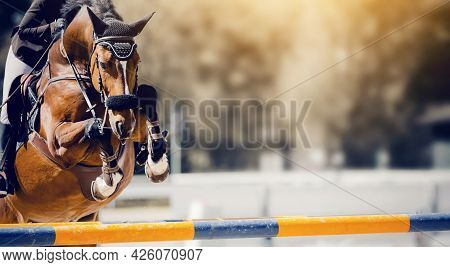 The Bay Horse Overcomes An Obstacle. Equestrian Sport, Jumping. Overcome Obstacles. Jumping Horse. D