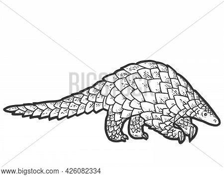 Pangolin Animal. Sketch Scratch Board Imitation Coloring.