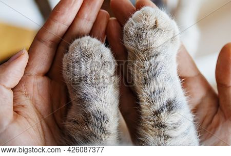 Cat Paw In Woman Hands. Symbol Of Friendship Of Cat And Human.