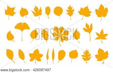 Set Of Vector Autumn Leaves, Herbal Element. Big Collection Of Fall Simple Orange Leaves. Silhouette