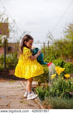 A Charming Girl In A Yellow Dress Fluttering In The Wind Waters Yellow Tulips From A Watering Can In