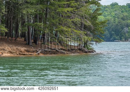 Erosion With Exposed Tree Roots And Rough Shoreline At Lake Lanier In Georgia On A Bright Day In Spr