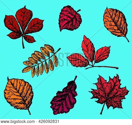 Set Of Drawn Autumn Leaves Of Various Deciduous Trees