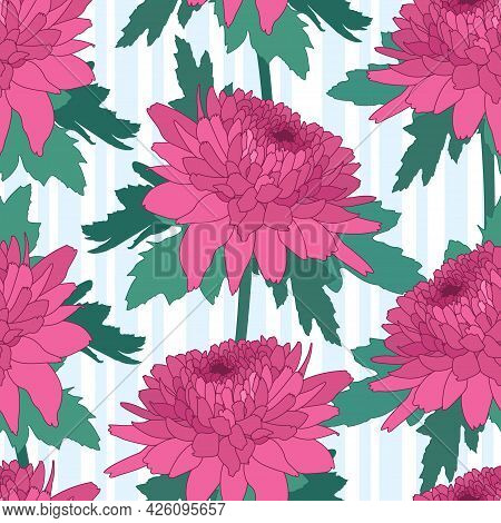 Seamless Decorative Pattern With Pink Chrysanthemum And Stripes. Crown Daisy Repeated Background. Ve
