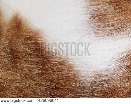 Ginger And White Cat Fur Texture Background.