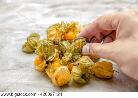 Physalis In Hand. The Hand Takes The Sweet Yellow Physalis Berries, The Ripe Physalis Fruits Lie On