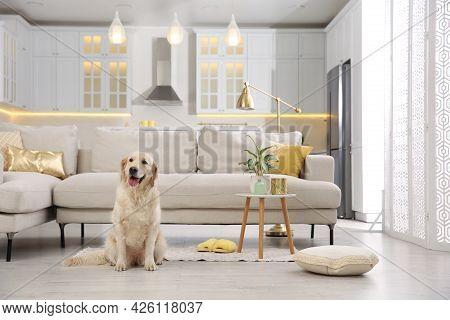 Modern Living Room Interior. Cute Golden Labrador Retriever On Floor Near Couch