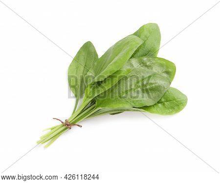 Leaves Of Broadleaf Plantain On White Background. Medicinal Herb