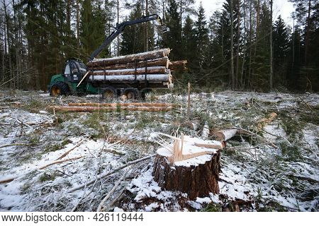 Belarus - 02.02.2015 - A Timber Truck Loaded With Trees In Winter In The Forest On The Snow Foyer.