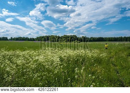 A Woman In A Yellow T-shirt On A Large Field With White, Purple And Yellow Flowers, Russia.
