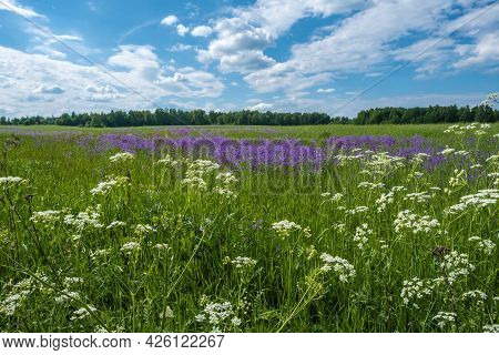 A Large Field With White And Purple Flowers On A Summer Day.