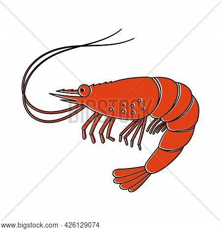 Shrimp Icon Or Tiger Prawns, Fresh Seafood. Isolated On White Background. Vector Illustration.