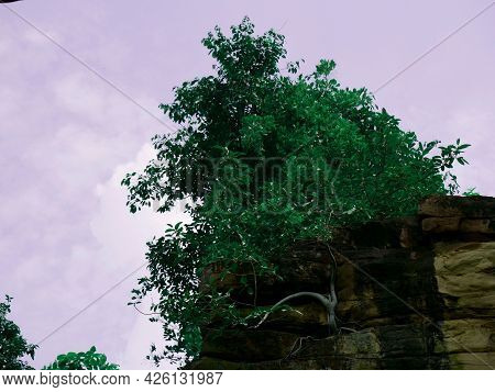 Tree Growing On Stone Rocks At Sky Background.