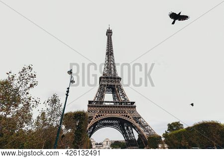 Eiffel Tower In Autumn. Flying Bird By Eiffel Tower. High Quality Photo