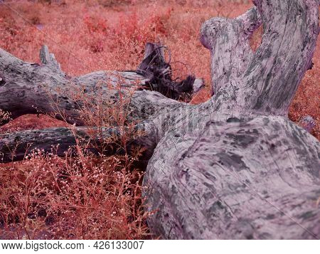 Wooden Tree Fallen Down At Natural Field Forest Background.