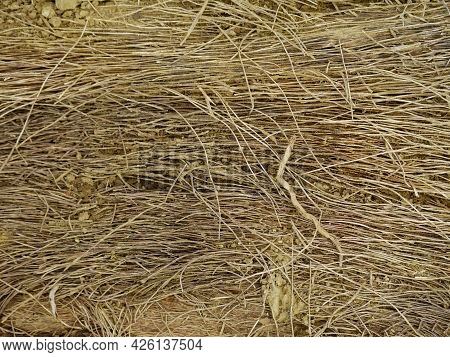 Dry Grass Root Texture For Nature Presentation In Brown Color.