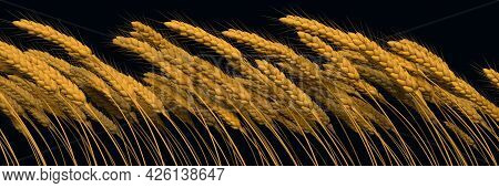 Agricultural Yield - Gold Wheat Line Close View Isolated. Digital Nature 3d Illustration