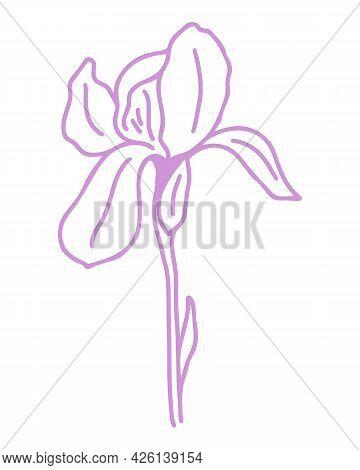 Silhouette Of Delicate Purple Iris Flower, Vector. An Illustration Of An Elegant Garden Flower. Outl