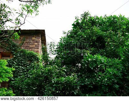 Stone Brick Ancient House Side Corner View Behind Natural Green Tree Leaves At Sky Background.
