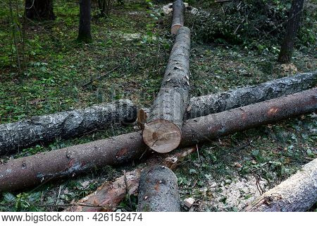 Deforestation Forest And Illegal Logging. Cutting Trees. Stacks Of Cut Wood. Wood Logs, Timber Loggi