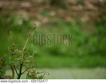 Dragonfly Insect Seating Tropical Plant Green Natural Blur Background.