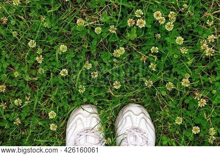 Close Up And Soft Focus Of White Women's Sneakers On A Background Of Green Grass And Clover Flowers.