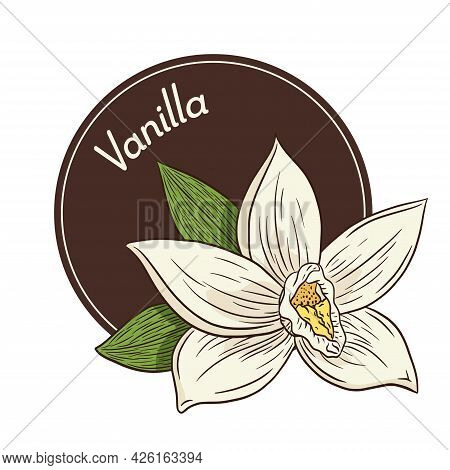 Vanilla Flower Logo And Emblem Template In Vintage Style. Line Drawing Aroma Vanilla Blossom Isolate