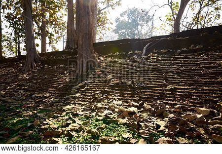 Trees Sprouted Through The Ancient City Walls Of Chiang Saen. One Of The Oldest Settlements In Thail