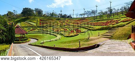 Panoramic View Of The Beautiful Garden Landscape At Doi Mae Salong. Bushes Of Plants Of Different Co