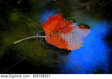 Fall leaf golden color in autumn water with blue sky reflection yellow