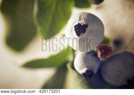 Ripening of blueberries on a slate wall.
