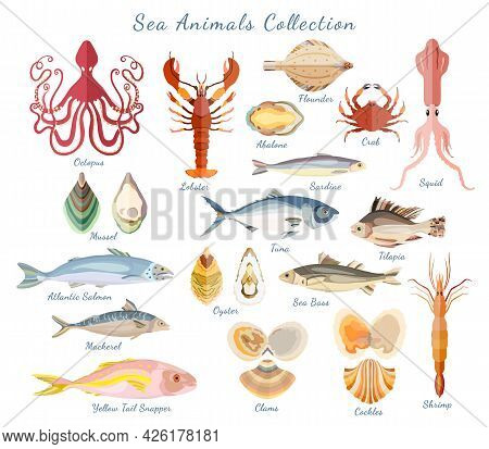 Big Set With Sea Creatures Isolated On White. Crustaceans, Sea And Ocean Fishes, Seashells Gathered