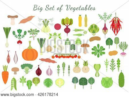 Big Set With A Various Types Of Vegetables. Green Vegetables, Roots, Squashes, Mushrooms, Tomato And
