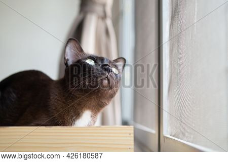 Brown Cat Is Looking At Bird Throughout Outside Window Curiously Funny Facial Expression