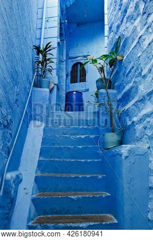 Blue houses in streets of of Jodhpur, also known as Blue City due to the vivid blue-painted Brahmin houses, Jodhpur, Rajasthan, India