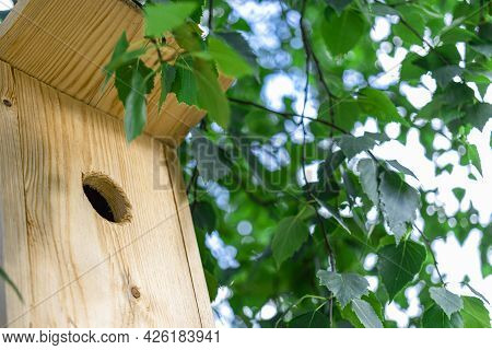 Birdhouse On A Tree Close-up. Caring For Birds And The Environment. Bird Feeders. Support For Birds
