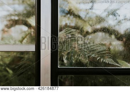 Wood ferns in a glasshouse