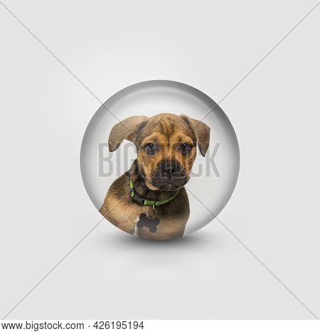 Head shot of a puppy crossbreed dog, isolated, in a circle