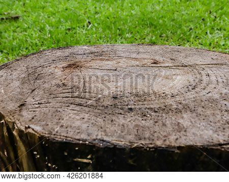 Texture And Grooves Of A Wooden Log With The Green Of Nature In The Background.