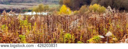 Autumn View With Thickets Of Wild Grass On The Background Of The River, Panorama