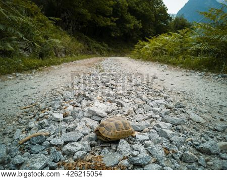 A turtle takes a walk on the dry riverbed in the middle of the forest.