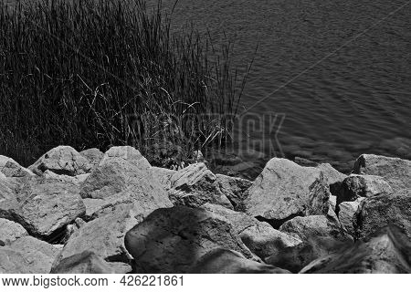 Rock Rip Rap, Dried Grasses, And Reeds Along The Shoreline Of Lake Meredith Near Fritch In The Texas