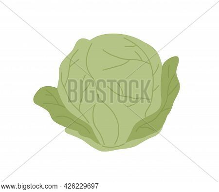Fresh Whole Cabbage With Green Leaves. Head Of Raw Leafy Kale. Icon Of Natural Organic Vegetable. Fl