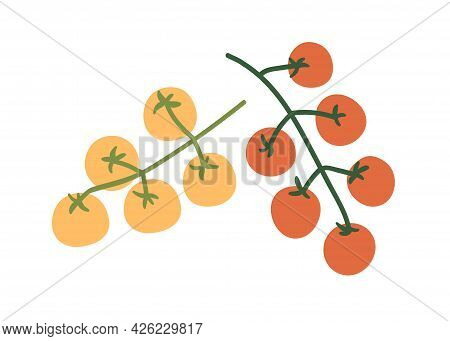 Fresh Cherry Tomato Branches. Small Vegetables On Food Plant. Red And Yellow Natural Raw Veggies On