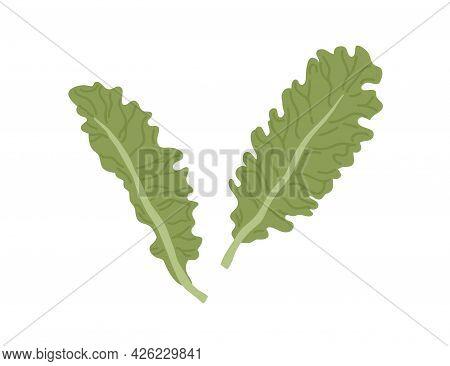 Fresh Green Leaves Of Lettuce. Raw Salad Leaf. Natural Organic Veggie. Healthy Leafy Vegetable. Flat