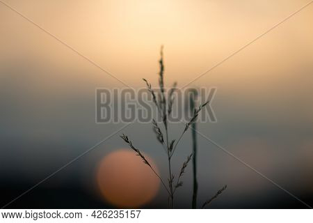 Close Up Photo Of Grass With Blured Background At Sunset. Fairytale, Spiritual, Peaceful Nature