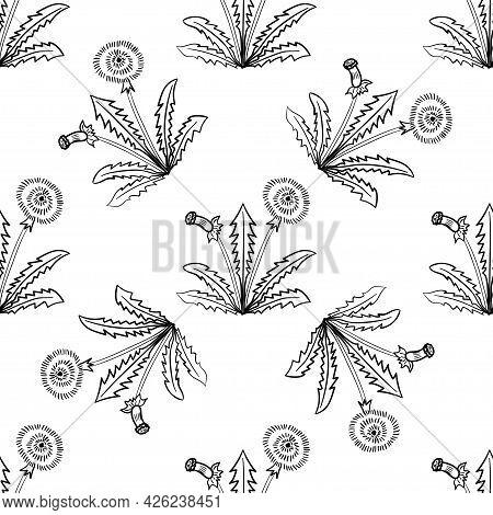 Dandelion, Seamless B-w Dd Ww Herb Isol